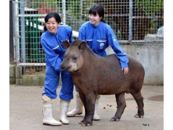 東京動物専門学校
